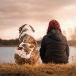Hondenvoer voor jouw trouwe viervoeter